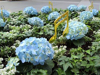 東京国際フォーラム、花壇のアジサイ(ブルー)